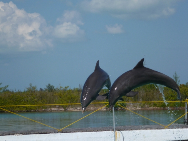 They even had dolphins at Playa Sirena