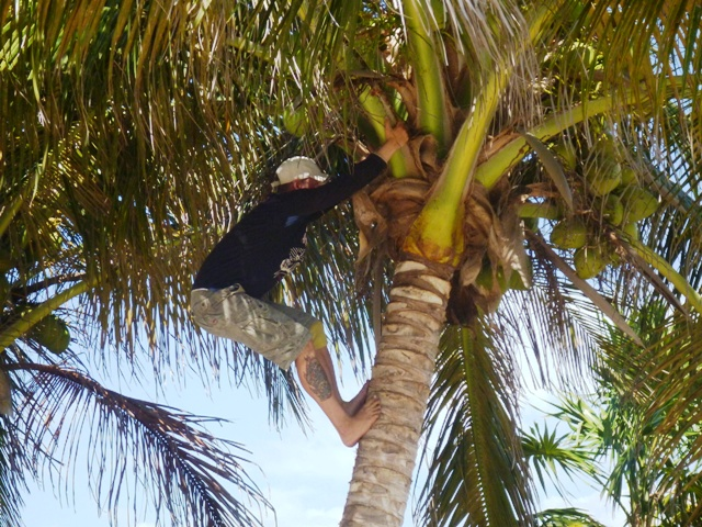 Lazaro climbing the coconut tree for fresh coco for us