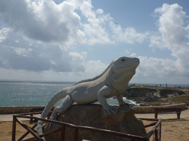 there are iguanas everywhere, but this guy was very impressive on his rock posing