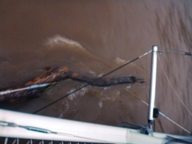 this log attached itself to the bow of the boat during the night; huge!